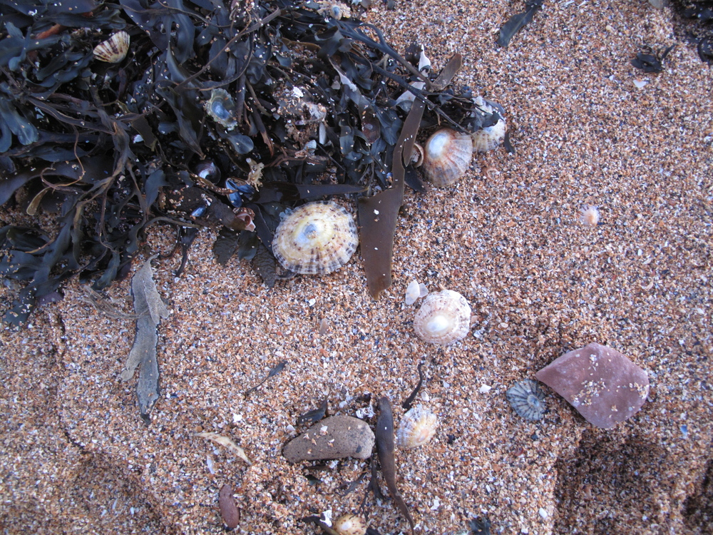 Purple sand and black seaweed and small limpet shells.
