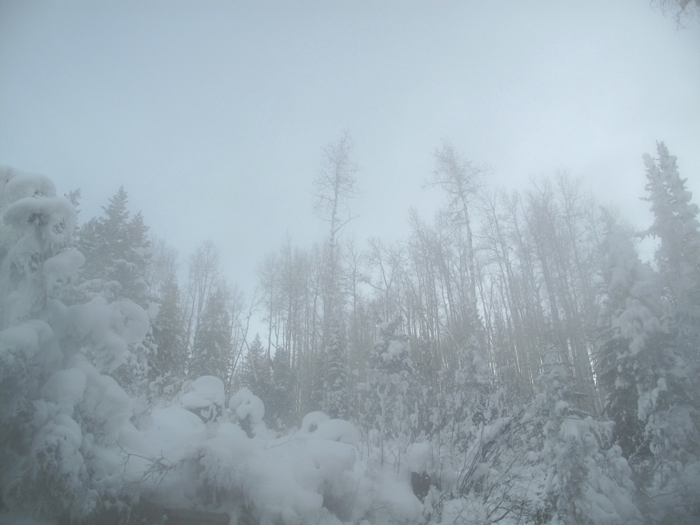 Snow in the trees among the steam at Strawberry Hot Springs.