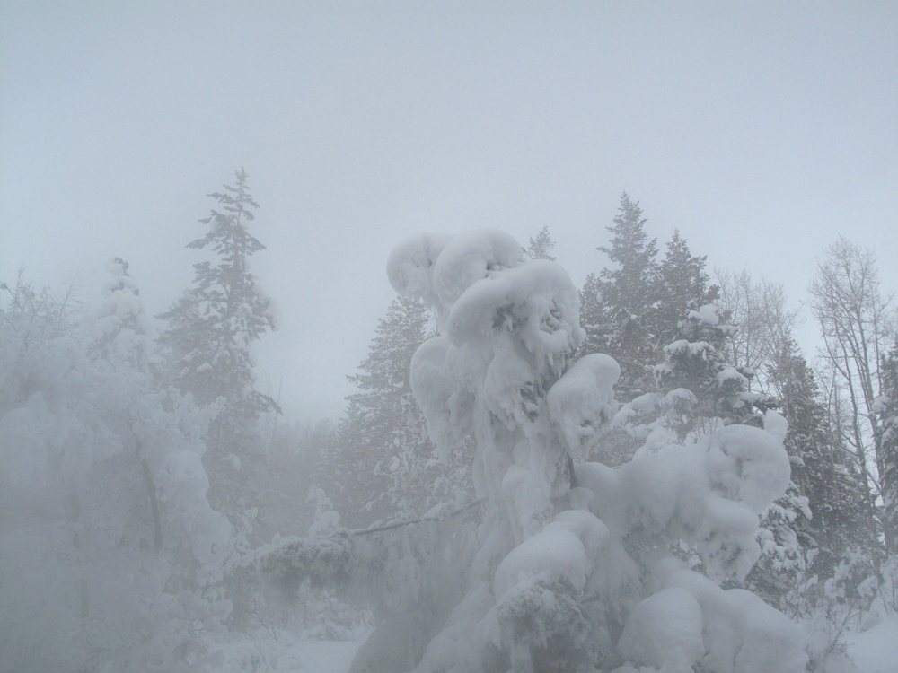 Crazy snow tree shapes, knarled from the steam at Strawberry Hot Springs, Colorado.