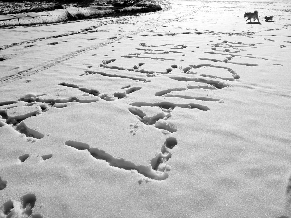 Aliens Land Here - written in the snow in Calvin and Hobbes style.