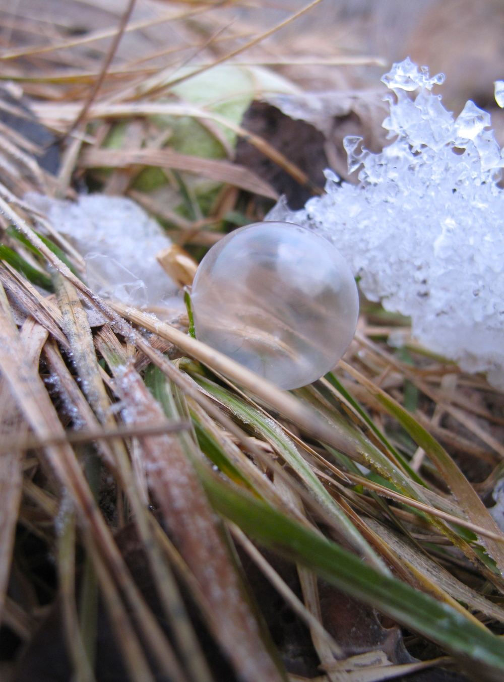 Bubble freezing on stalks of hay in the early morning.