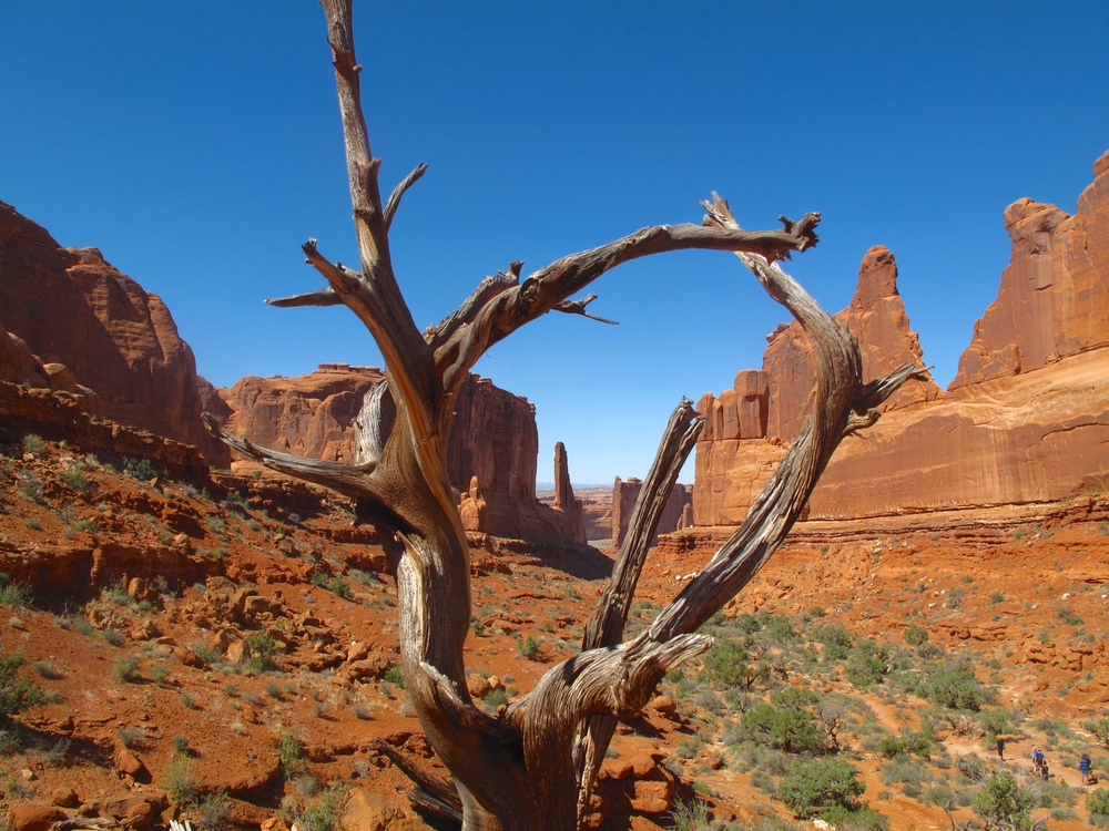 The Courthouse Towers seen through a dry twisted tree, Arches National Park, Utah.