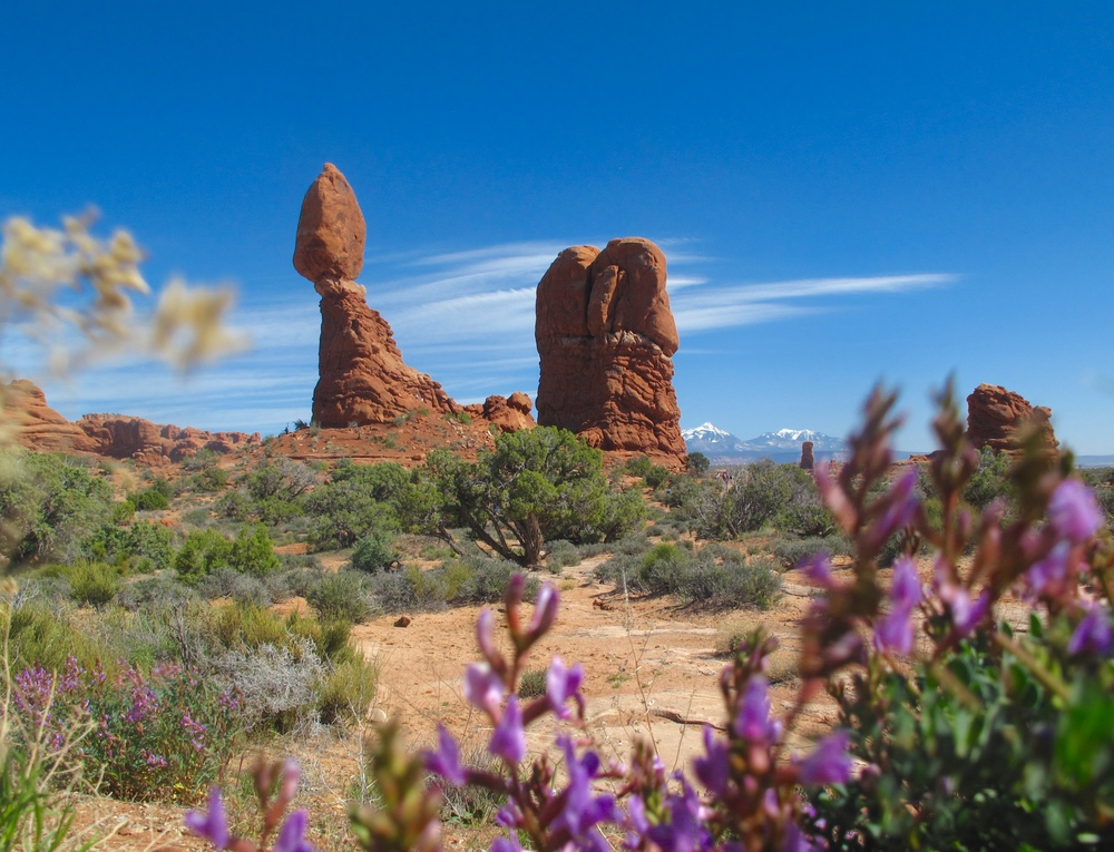 Balanced Rock - with desert flowers, in Arches National Park, Utah.
