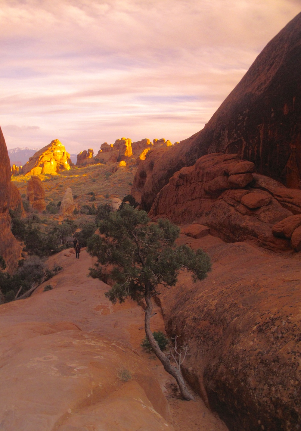 Small desert tree in Arches National Park at sunset.