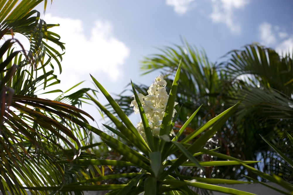 Palm leaves and white flowers.
