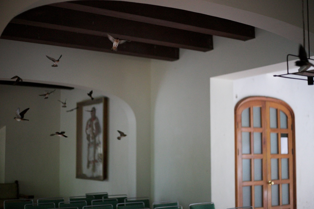 Swallows nesting in the rafters of an old world Mexican hotel.