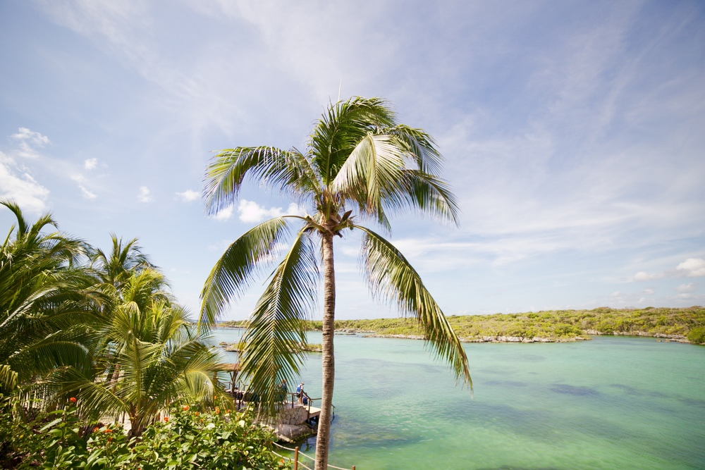 Xel Ha lagoon - green waters and palm trees.