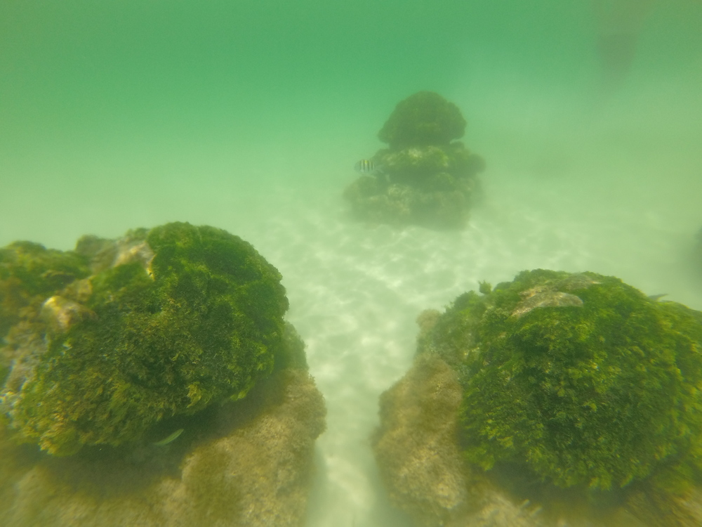 Moss covered rocks underwater with small fish.