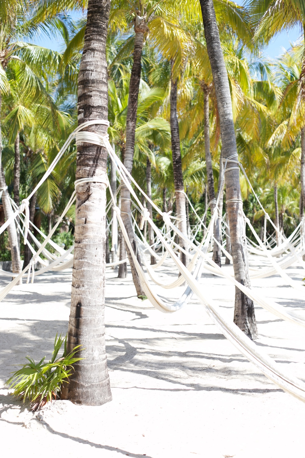 Hammocks on palm trees - at Xel Ha.