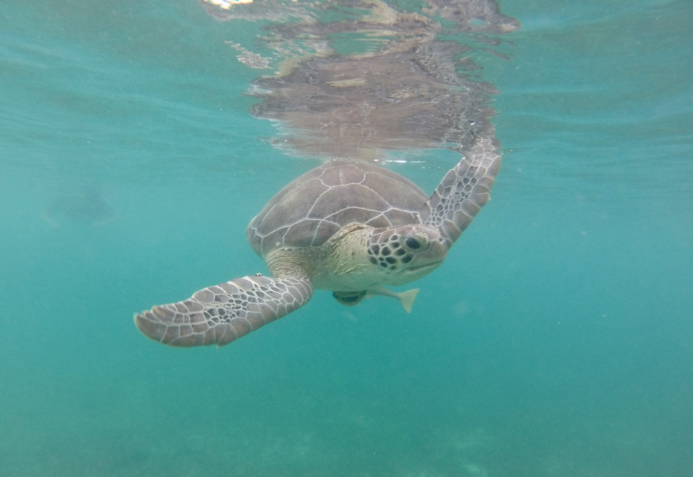 A turtle looking at me underwater.