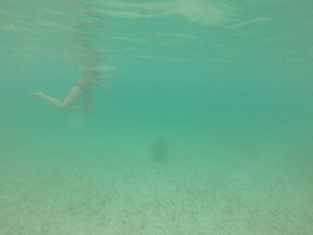 Swimming free with wild sea turtles.