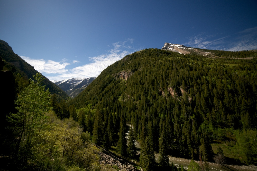 Pine forests and mountains, Colorado.