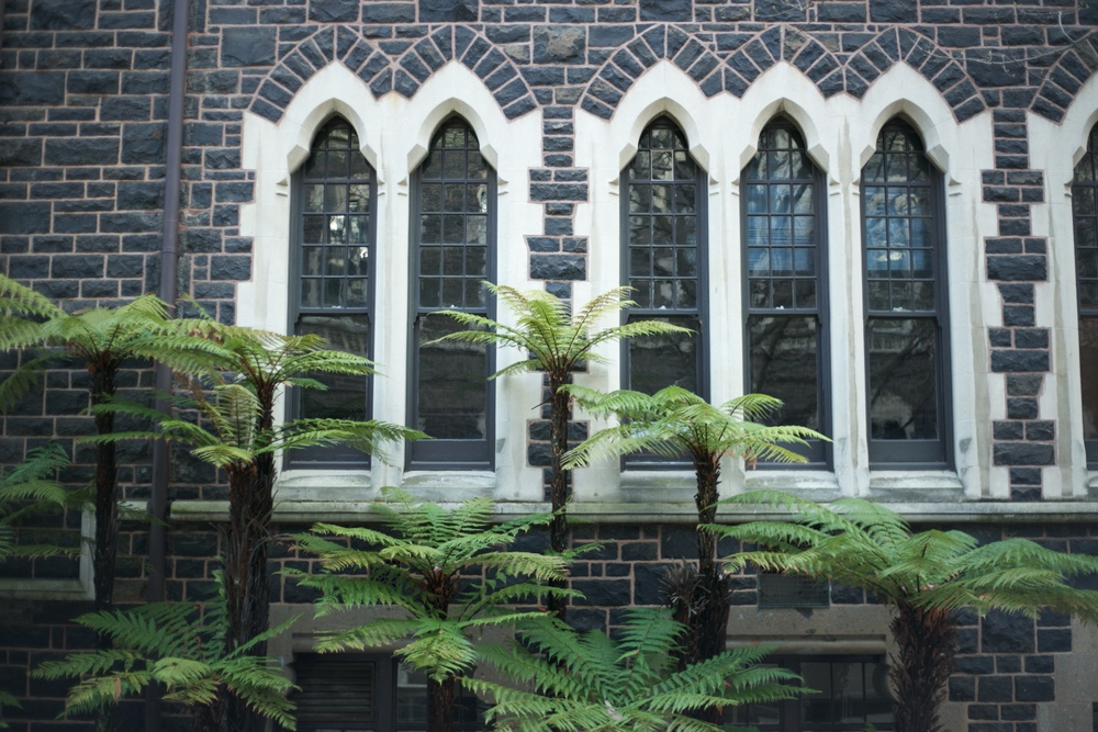 The beautiful architecture at the University of Otago, with fern trees.