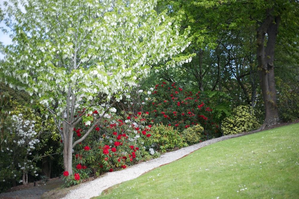 Tannock Glen gardens during rhododendron week, Dunedin.