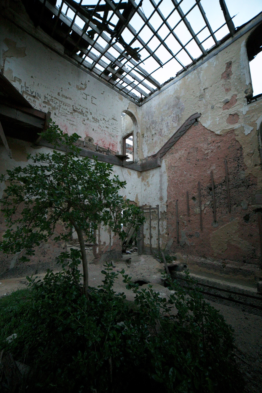 Trees growing inside the abandoned castle.