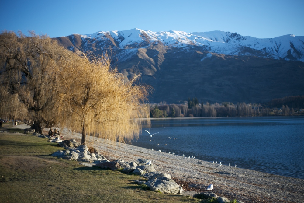 Bare trees beside Lake Wanaka.