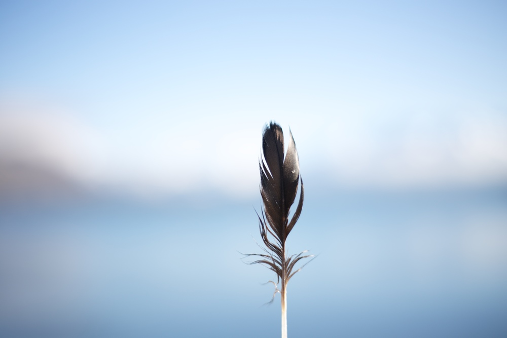 A feather and blue water.