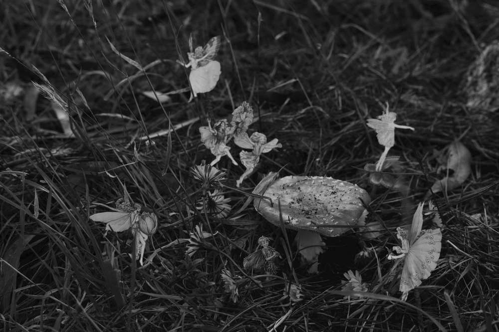 An old style photograph of fairies in the garden by a toadstool.