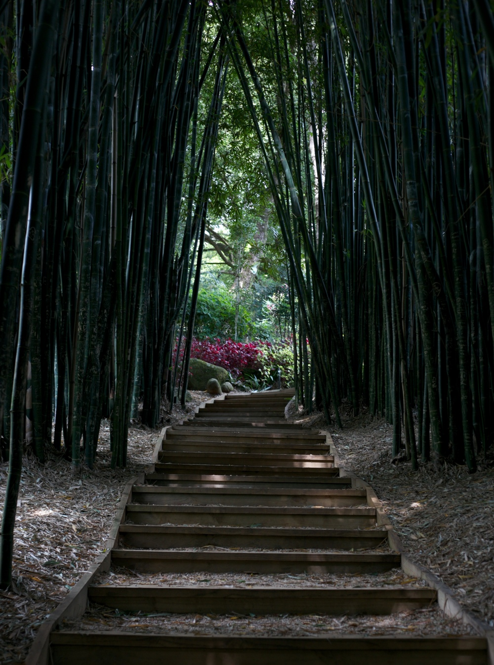 A corridor through bamboo shoots - at Crystal Castle.