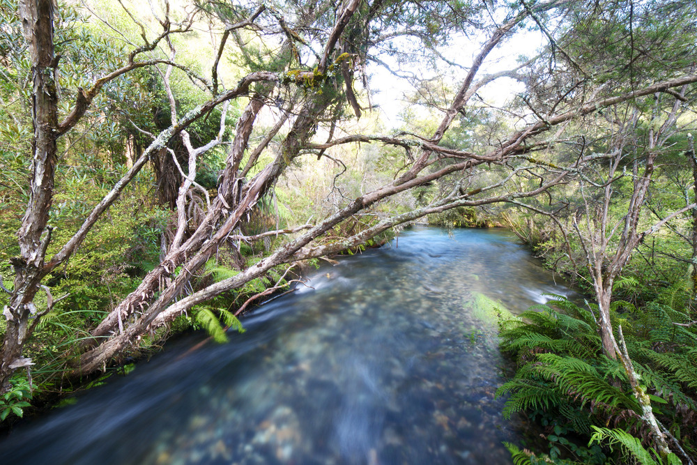 The Waikoropupu river - clear water from the springs.