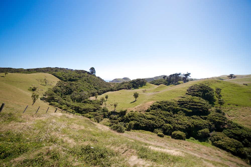 Rolling green hills in the Takaka area.