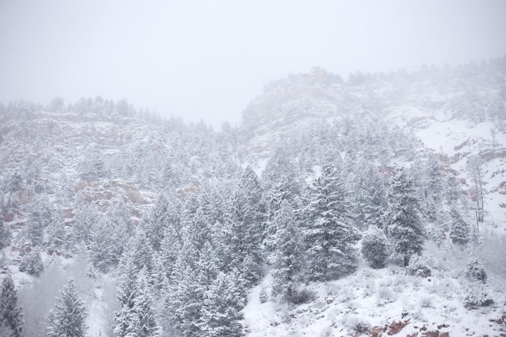 A snowy pine landscape, Colorado.