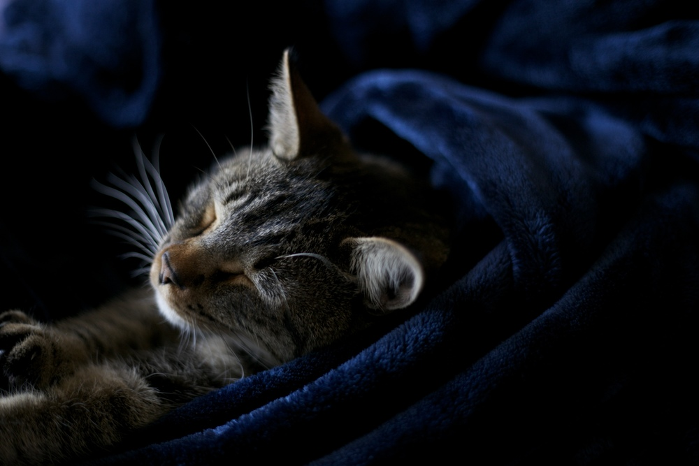 Stretching kitty in a soft blanket.