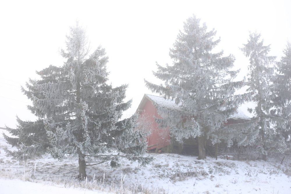 red house hidden by trees