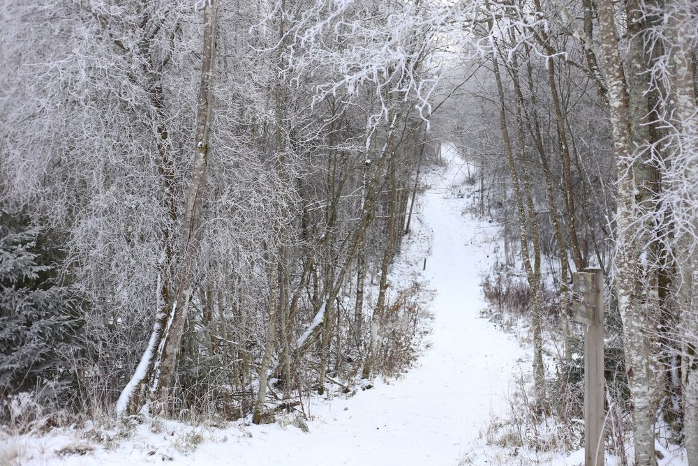 snow on forest path