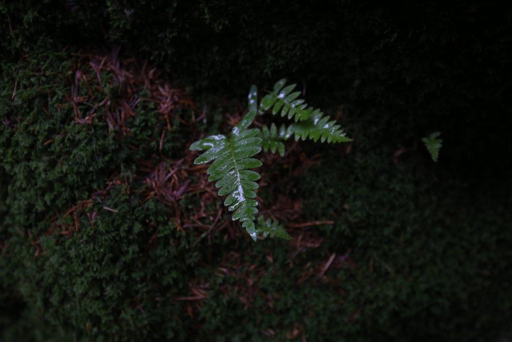 ferns in Norway
