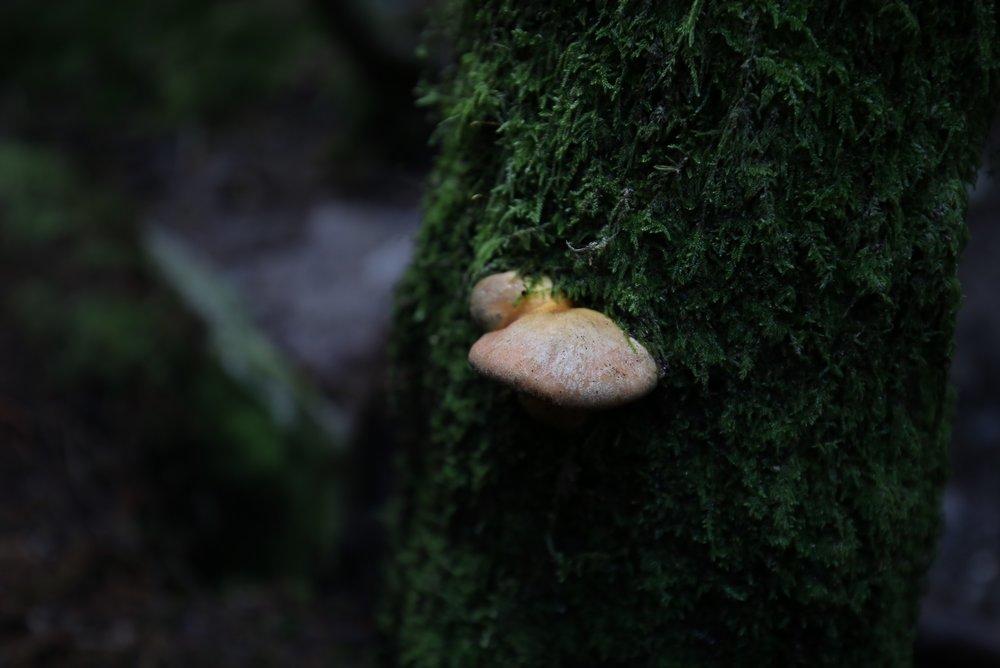 mushroom on mossy tree