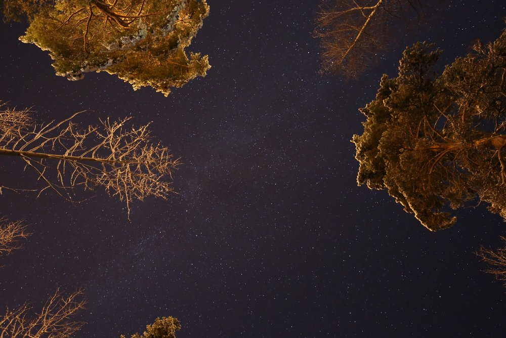 the polar night sky