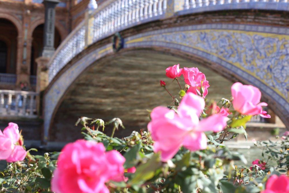 roses and tiled bridge
