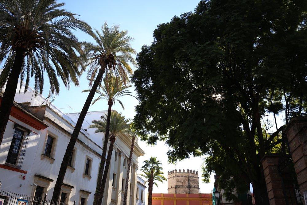 sevilla palm trees