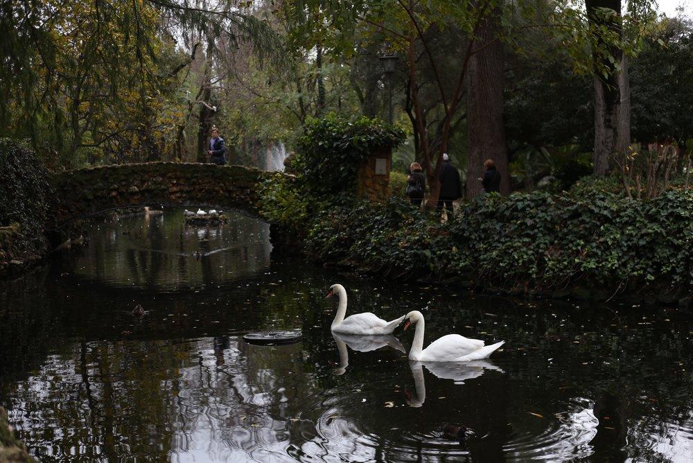 swans maria Luisa sevilla