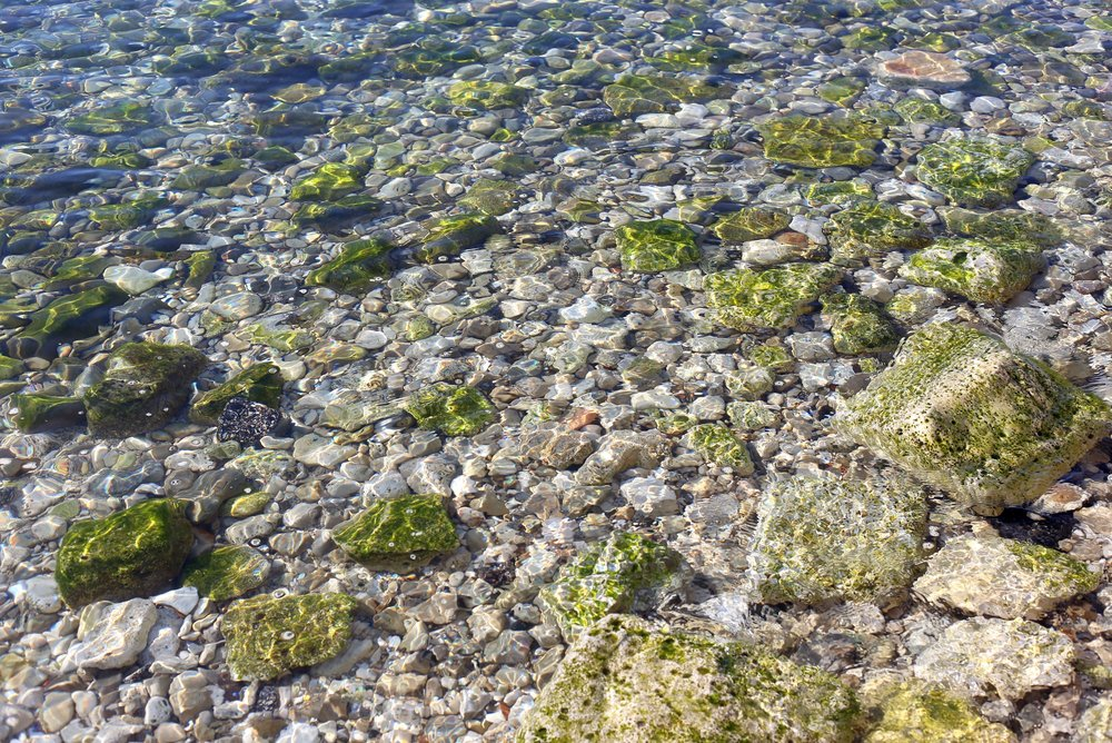 Clear sea water with green algae covered rocks - in the Adriatic.
