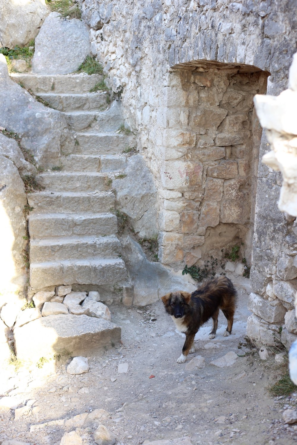 Curious dog abandoned in the ruins of a castle.