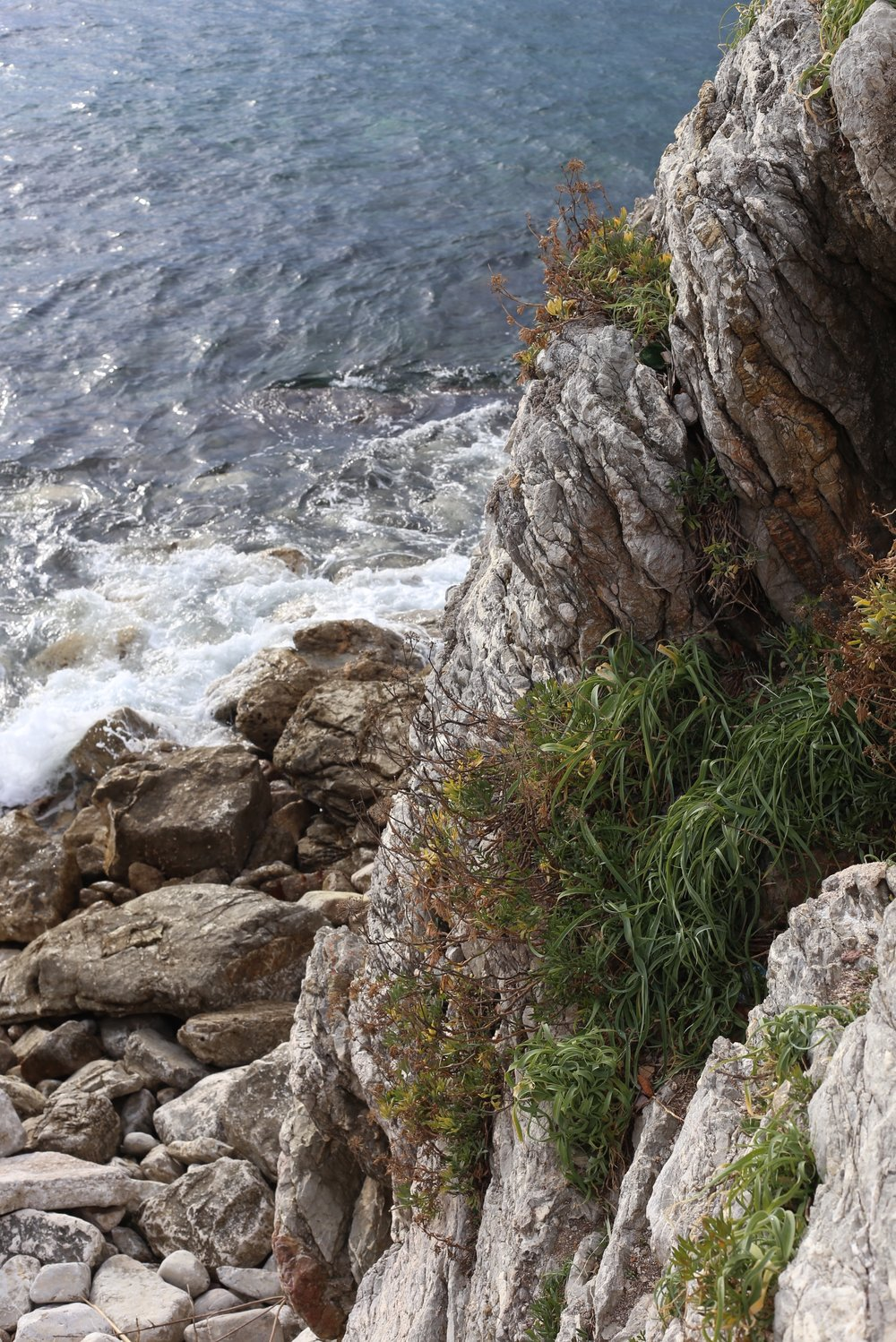 Rocks and plants by the shores of Montenegro