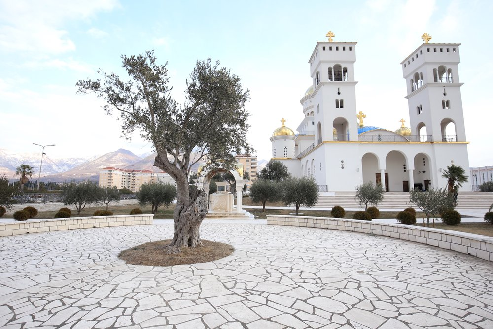 A twisted old olive tree outside an Orthodox church with its gold roof gleaming.