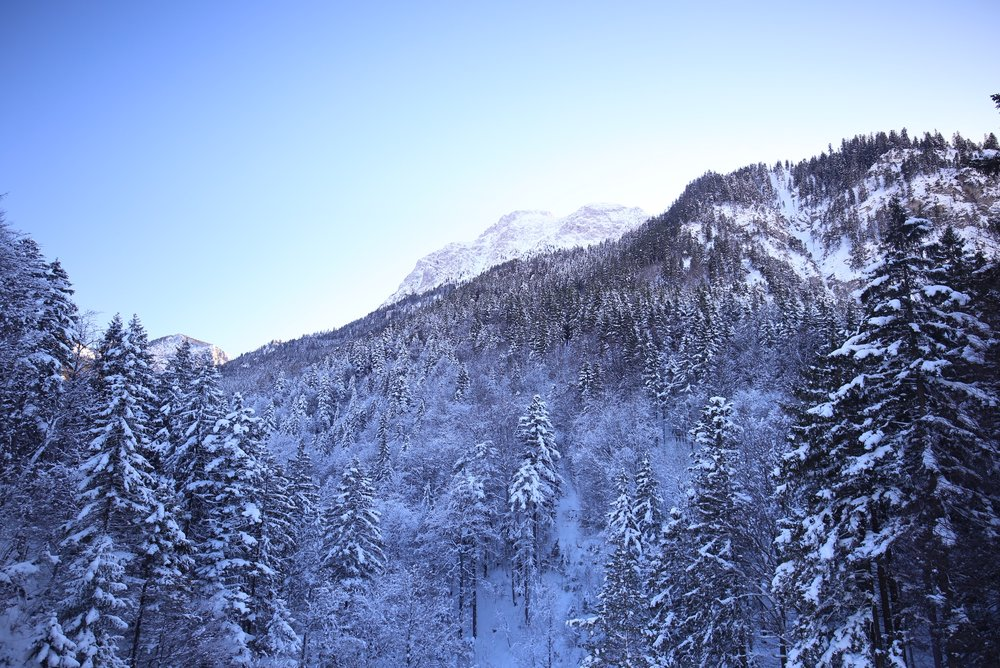 A mountain covered in pine trees, all blanketed in blue snow.