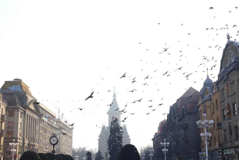 Pigeons flying in a swarm over Timisoara - true Dracula halloween style.