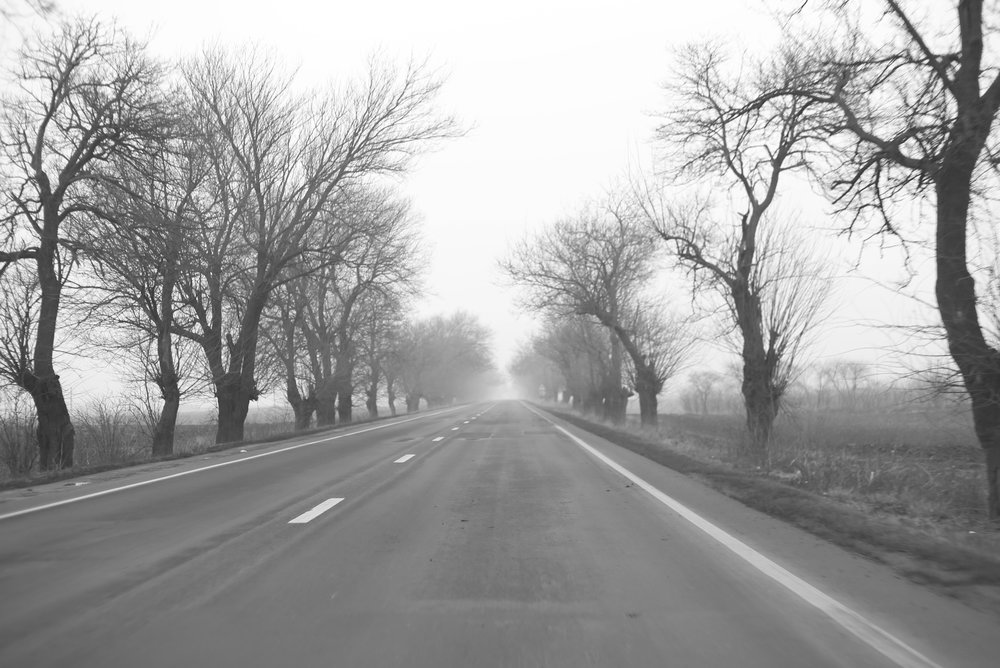 Romanian roads - creepy twisted trees in the mist.