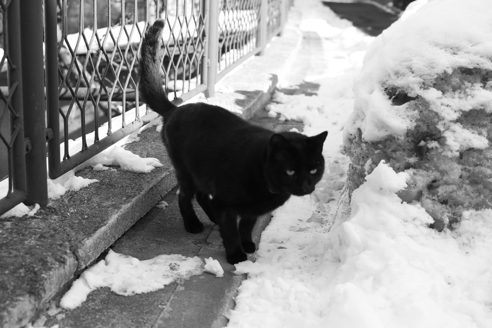 Black cat in the snow - magic and superstition.