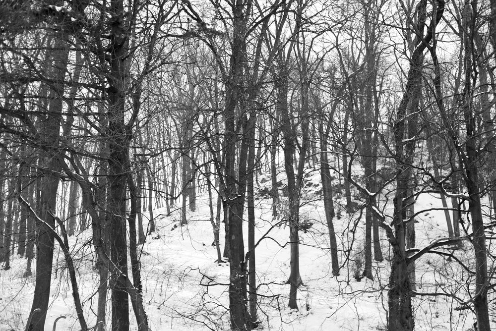 Bare branches in a winter forest.