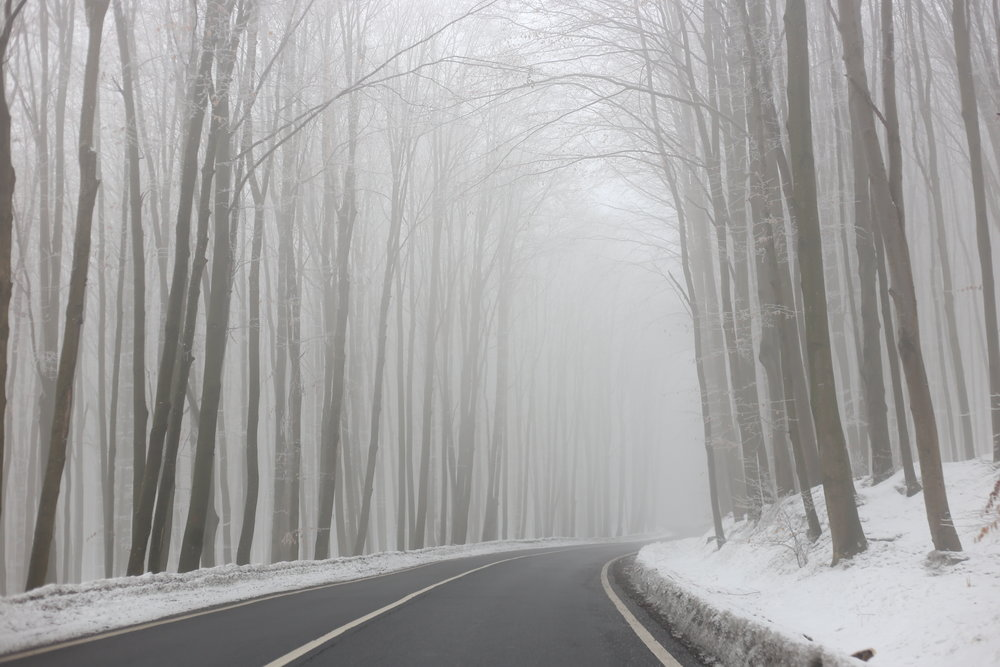 White frost covered forest under a spell in Romania.