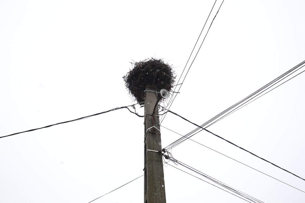 A stork's nest on top of a telephone pole.
