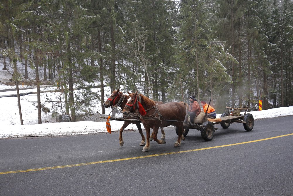 A horse and cart on a forest road - one of the main forms of transport in Romania.