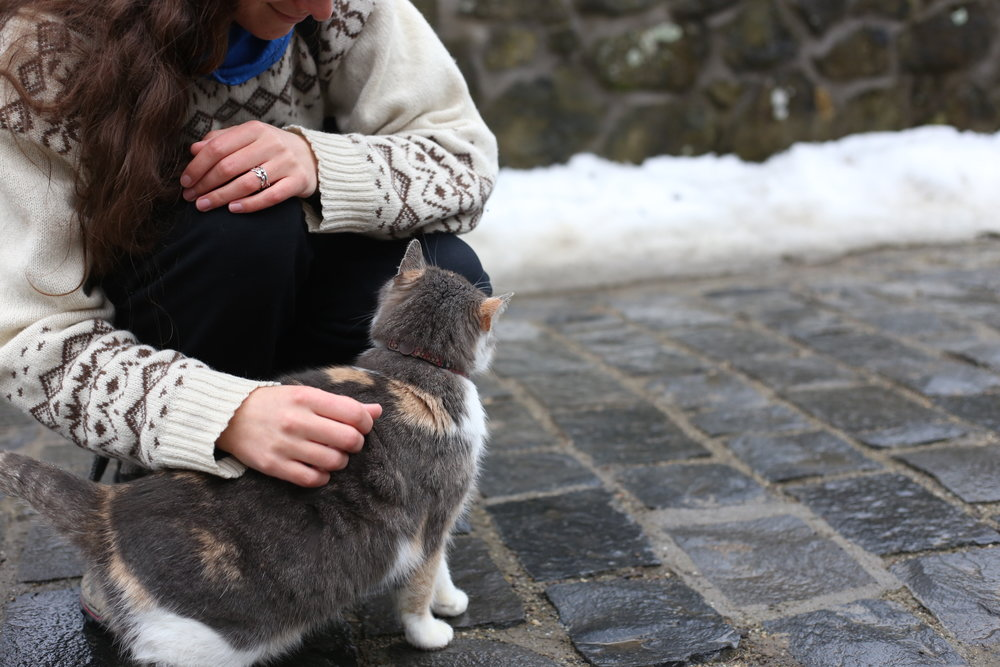 A sweet grey tabby cat in the cute town of Holloko.