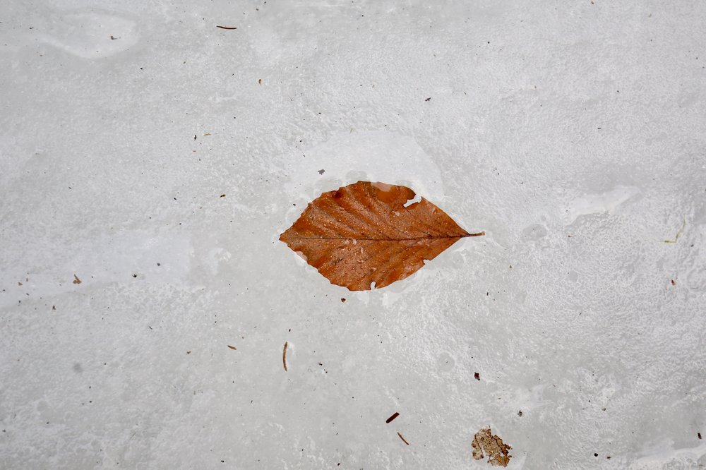 A small orange leaf from Autumn, now frozen into the ice of the river.