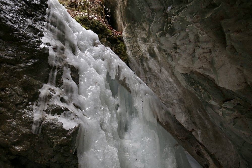 Frozen water draped over a tree trunk, wedged into the sides of a narrow canyon.